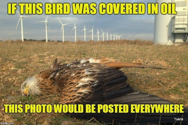 Dead eagle windmill