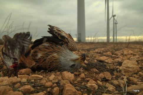 dead eagle 1