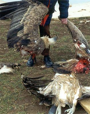 dead eagle 2